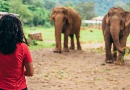 Tempat Perlindungan Gajah